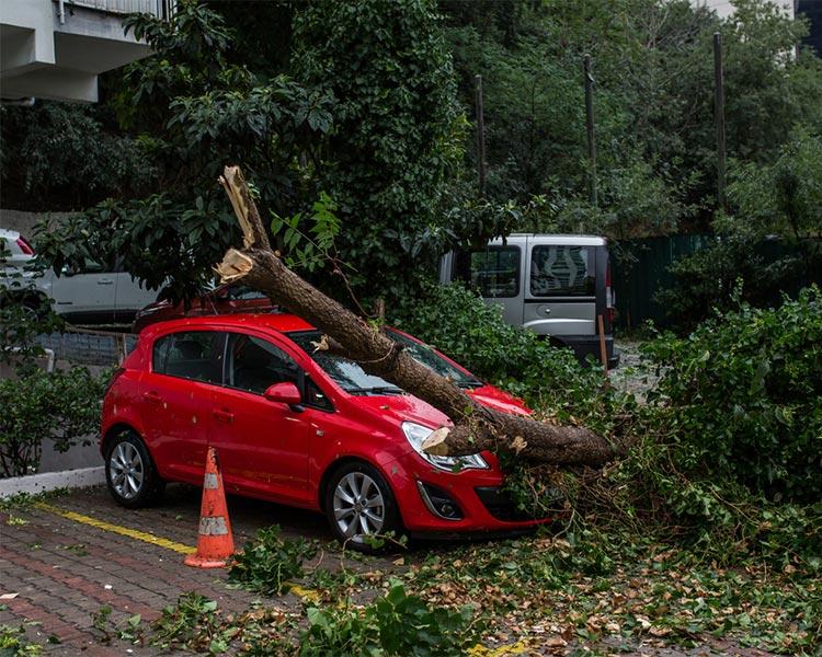 Tree fallen on a vehicle in Kenya