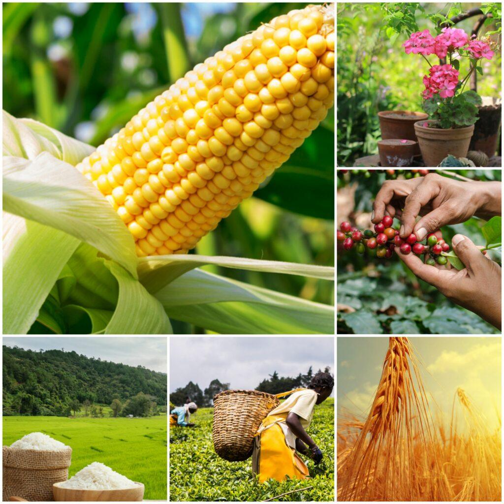Crop Insurance offered by Shimin Insurance Agency.jpg